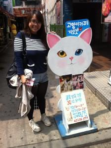 Cat Cafés in Seoul