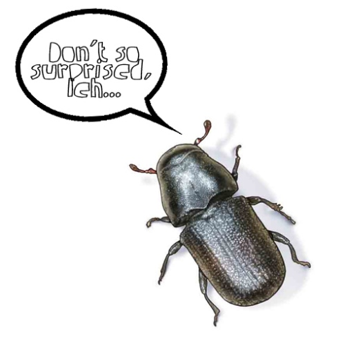 The Beetle that speaks Singlish.