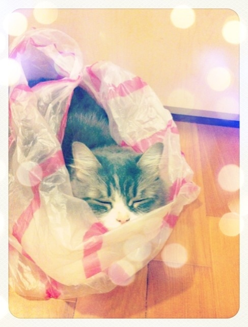 So. Muffin really has a thing for plastic bags.