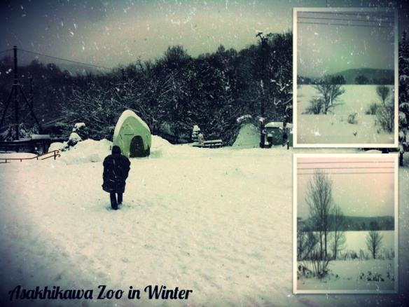 Hokkaido > Asahiwaka > Asahiyama > Zoo